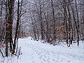 Havreballe Skov (vinter) 01.jpg