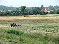 Hay-making in Langley Marshes - geograph.org.uk - 1380208.jpg