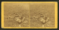 He sleeps his last sleep. A Conferederate soldier who after being wounded evidently dragged himself to a little ravine on the hill side, where he died, by Gardner, Alexander, 1821-1882.png