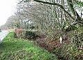 Hedgerows by entrance to Broadsmoor Farm - geograph.org.uk - 302594.jpg