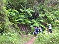 Helechos Arborescentes.jpg
