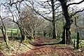Hen ffordd y mynydd. An old mountain road. - geograph.org.uk - 379096.jpg