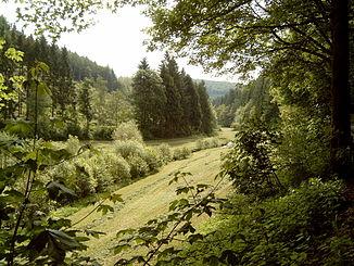 Henne südlich von Oberhenneborn