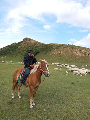 Heshigten Banner - Herdsman grazing sheep
