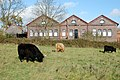 Highland cattle in front of Hatton canal workshops - geograph.org.uk - 1587829.jpg