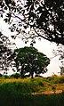 Hill Lalbagh.jpg