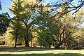Hoechster Stadtpark 09.jpg
