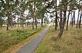Hoge Veluwe National Park, Otterlo - panoramio (15).jpg