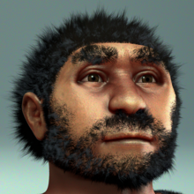 Asian homo erectus facial reconstruction