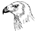 Hooked Beak (PSF).png