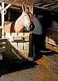 Horse Power (35104651333).jpg