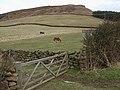 Horse pasture, Fairy Cross Plain - geograph.org.uk - 726479.jpg