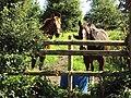 Horses, Shotwick.JPG