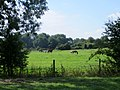 Horses meadow close to Yarwell - August 2013 - panoramio.jpg