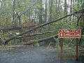 Hurricane Sandy hit Chincoteague National Wildlife Refuge (VA) (8141825585).jpg