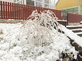 Ice damage, December 2014.jpg