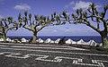 Ilha das Flores P5270255 (35877016551).jpg