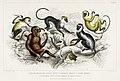 Illustration from A History of the Earth and Animated Nature by Oliver Goldsmith from rawpixel's own original edition of the publication 00023.jpg