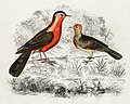 Illustration from A History of the Earth and Animated Nature by Oliver Goldsmith from rawpixel's own original edition of the publication 00090.jpg