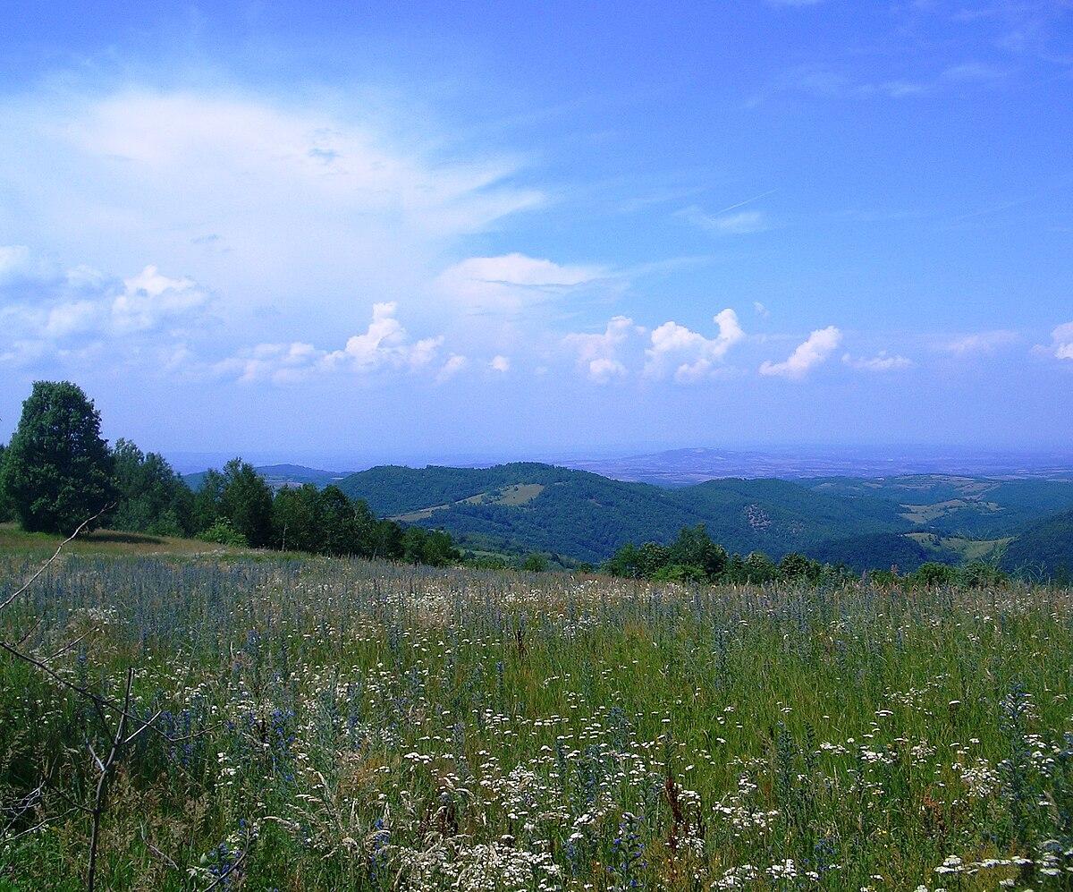 Crni vrh (Kragujevac) - Wikipedia