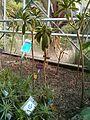 JC Conservatoire botanique national de Brest 02.jpg