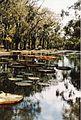 Jardin de Pamplemousses (3001831059).jpg