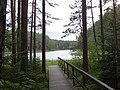 Jezioro Duży Sucharek - panoramio (44).jpg