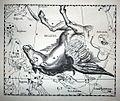 "Johannes Hevelius - Prodromus Astronomia - Volume III ""Firmamentum Sobiescianum, sive uranographia"" - Tavola T - Pegasus.jpg"