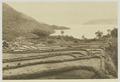 KITLV - 26894 - Kleingrothe, C.J. - Medan - Laying-out of paddy fields near Page at Lake Toba, Sumatra - circa 1905.tif