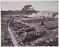 KITLV - 5418 - Kurkdjian - Soerabaja - Tilling the soil on the sugar plantation Ketanen near Mojokerto - 1916-04.tif