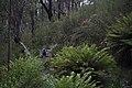 Kalymna Falls (17029717978).jpg