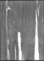 Kappa av svart mönstrad sammet, ca 1611-1632 - Livrustkammaren - 61903.tif