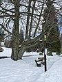 Karlova studánka, dub lesní (2).JPG