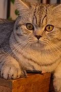 Katze mit Stift und Spitzer.jpg