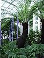 Kew-gardens-00008.JPG