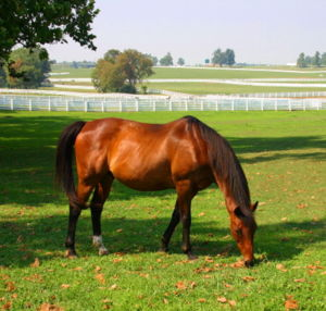 Horse at Kentucky Horse Park