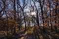 Kilen Woods State Park Autumn Hike - Minnesota (38904769212).jpg