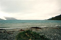 King Haakon Bay in South Georgia Island.jpg