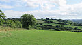 Kingcombe Meadows.jpg