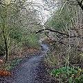 Kingswinford Railway Walk, West Midlands - geograph.org.uk - 643030.jpg