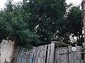 Kirovskiy rayon, Astrakhan' Astrakhanskaya oblast' Russia - panoramio - Александр Юхименко (3).jpg