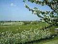 Kirschblüte - panoramio (24).jpg