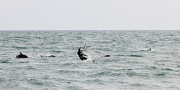 Kitesurfer and Dolphins Cropped