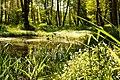 Kleiner Tümpel im Fuchsgrund.jpg