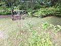 Kobe Municipal Arboretum in 2013-6-22 No,21.JPG