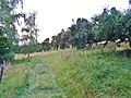 Kohlberg (Hill), Pirna 121948226.jpg