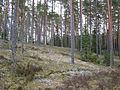 Kolmannen Salpausselän reunamuodostumaa Somerniemellä Somerolla.JPG