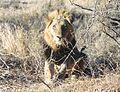 Krugerparkléiw2.jpg