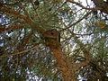 Kuş yuvası ve ağaç.JPG