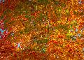 L'automne au Vieux-Port de Montréal (15276693128).jpg